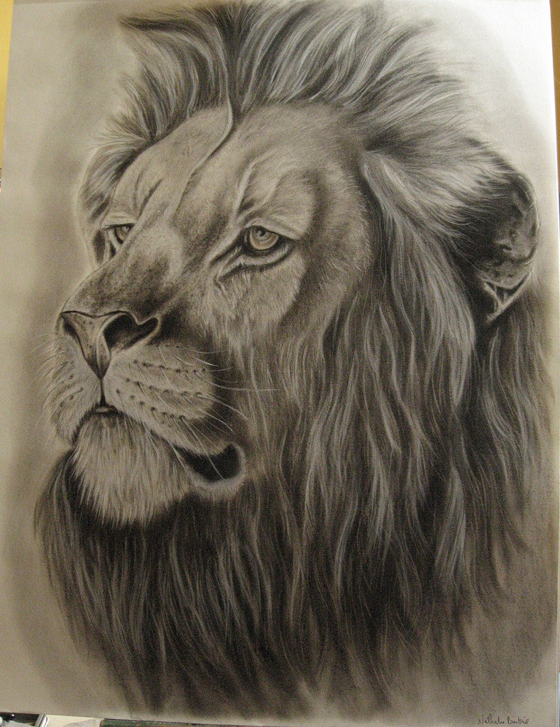 789x1024 Lion Drawing, Art Ideas, Sketches Design Trends