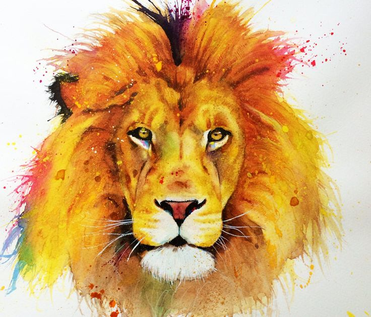 lion colour drawing at getdrawings com free for personal use lion
