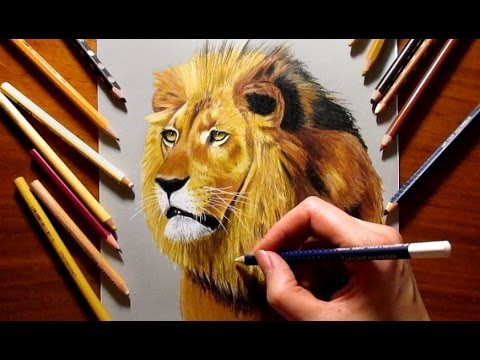 480x360 Colored Pencil Drawing Of A Lion