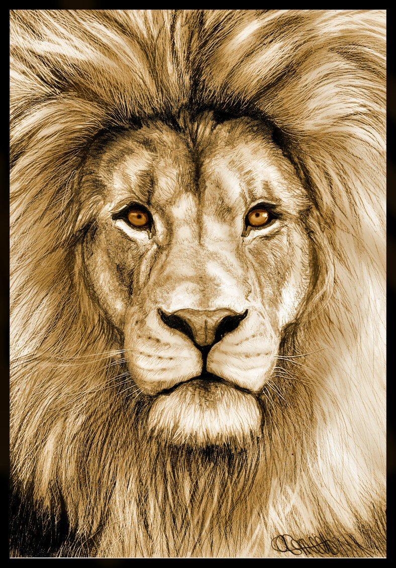 788x1131 Izu The Lion. Animate Art