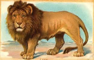 312x200 Lion Color Drawing