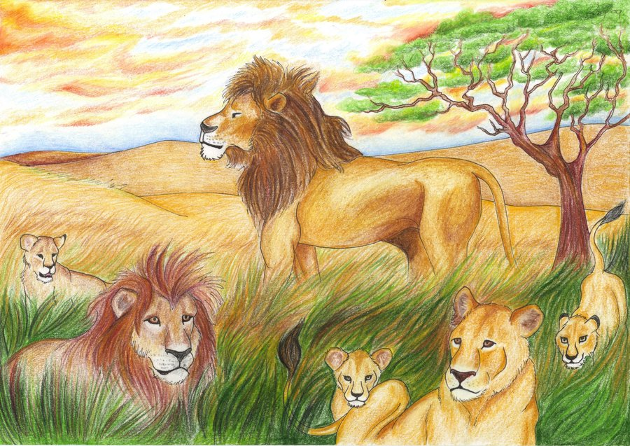900x637 Lionscape Coloured Drawing By Bexyboo16