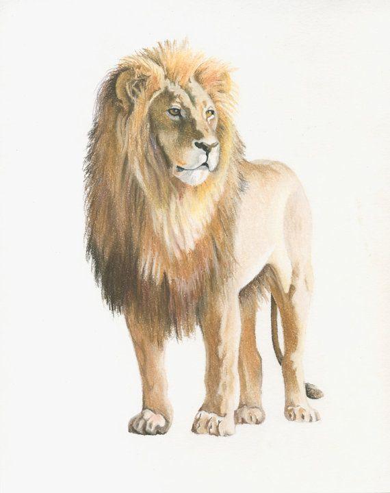 570x720 Resultado De Imagen De Lion Drawing Forgif Lions