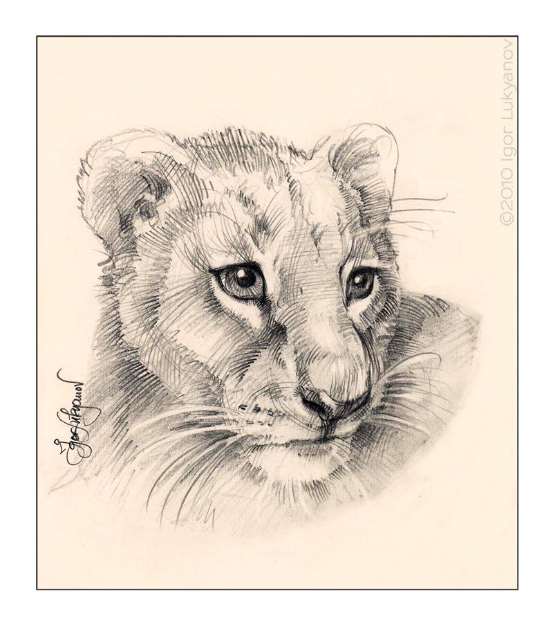 800x906 Cute Lion Cub Tattoo Lion Cub, Lions And Drawings