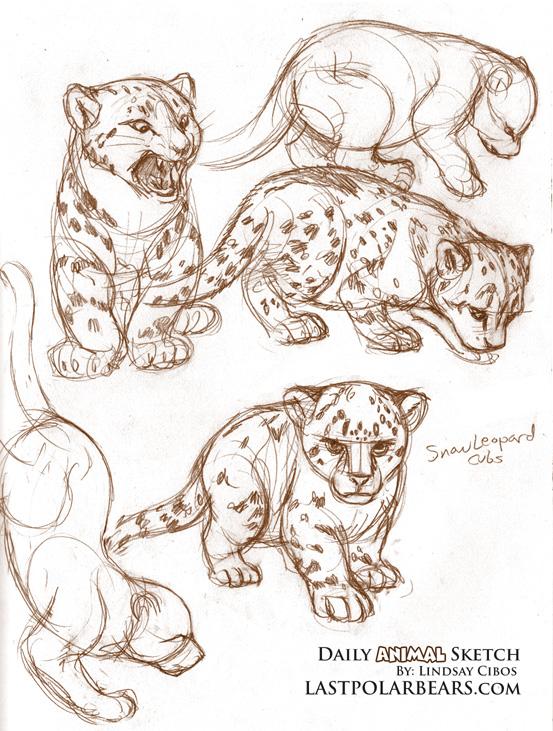 553x731 Daily Animal Sketch 002 Draw This Warm Ups