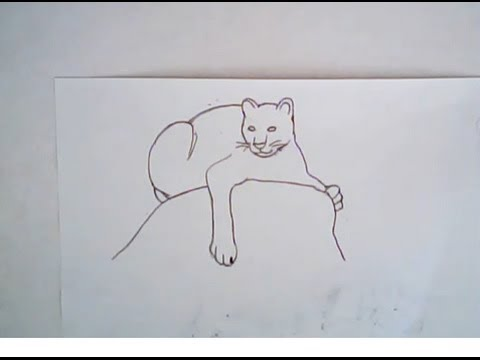 Line Drawing Of Lion : Lion cub drawing easy at getdrawings free for personal use