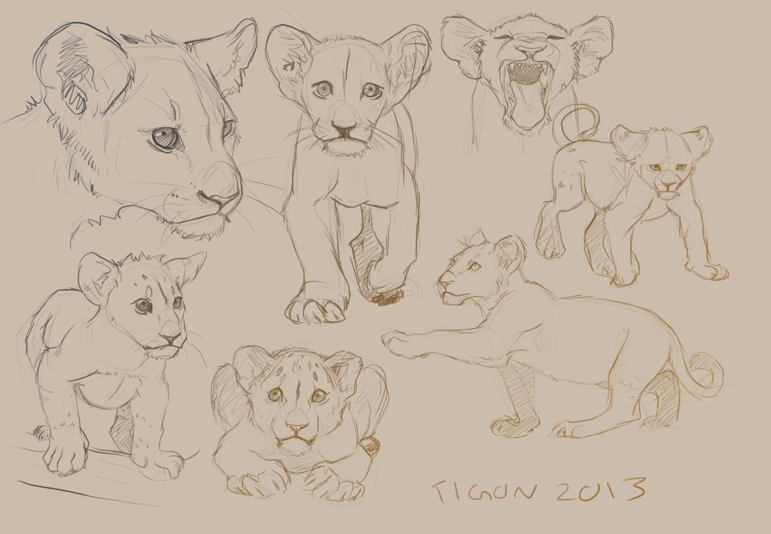 1100x762 Tiger Practice Sketches By Drkav