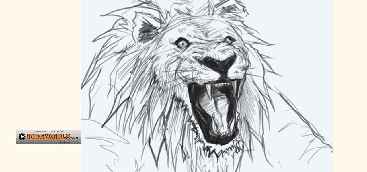 1280x600 How to Draw a bemused lion head for beginners Â« Drawing