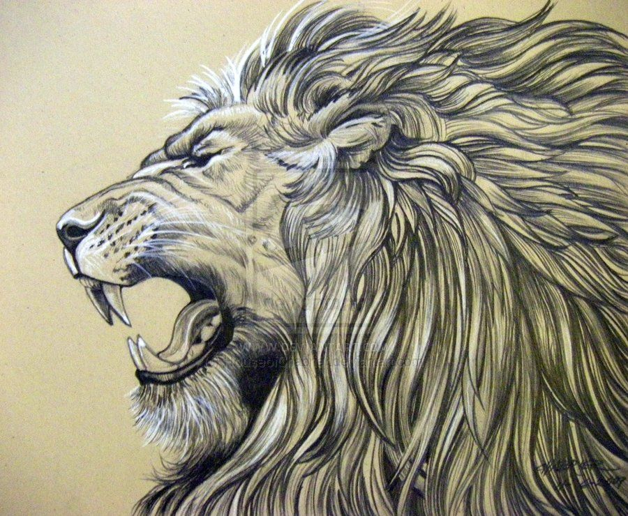 900x740 IDENTITY THIEF Roaring lion tattoo, Lions and Tattoo