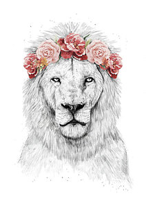212x300 Lion Drawings Fine Art America