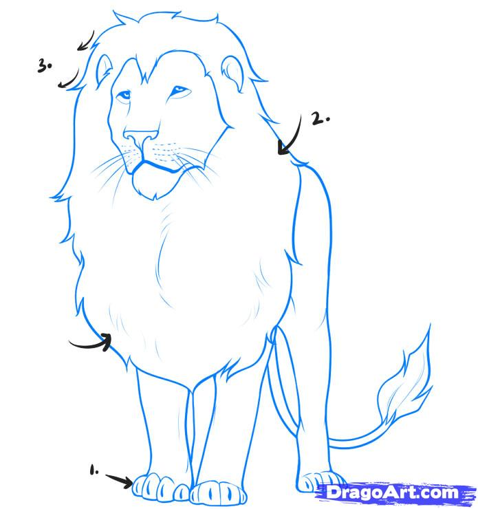 695x740 How Draw A Lion Step Step Free Download Clip Art Free How