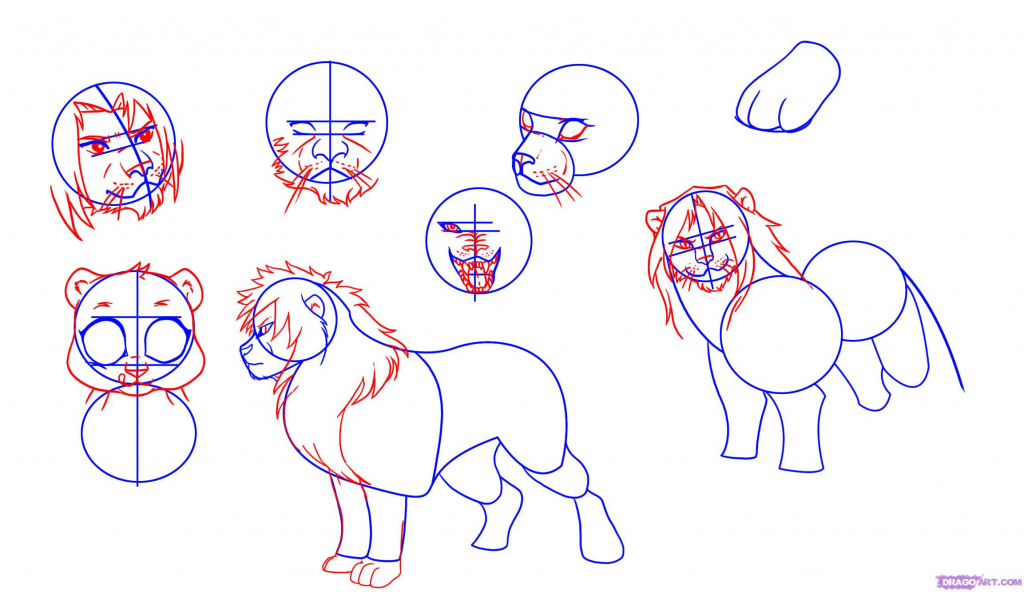 1024x592 Drawing A Lion Step By Step