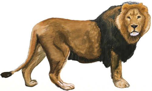 500x301 How To Draw A Lion