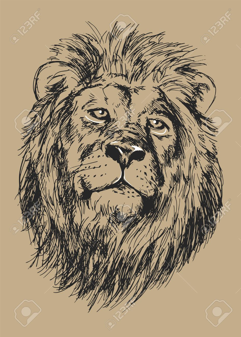 928x1300 Drawing Lion S Head Vector Illustration Royalty Free Cliparts