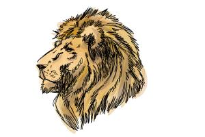 300x200 How To Draw A Lion Head