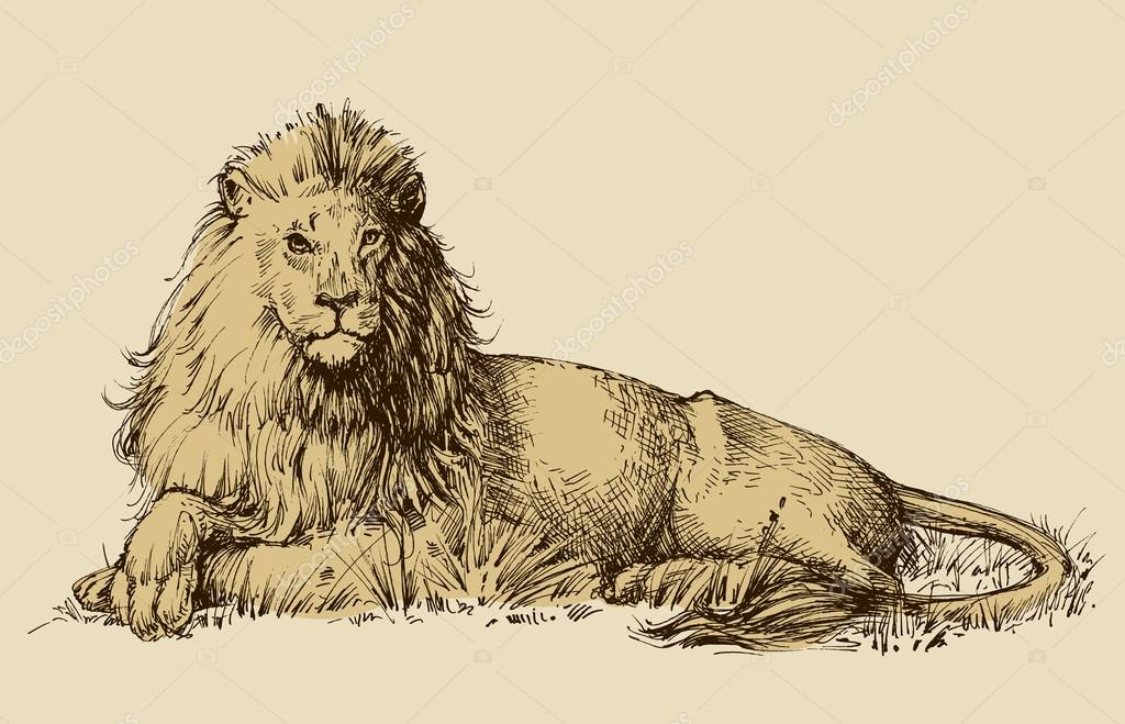 1024x659 Lion Sitting Drawing Stock Vector Danussa