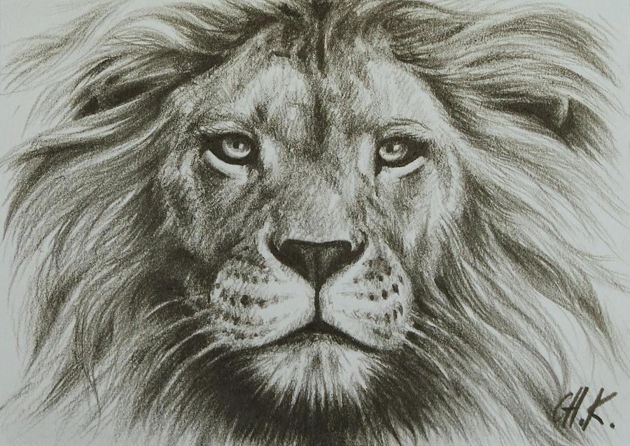 900x638 Gallery Art Photos Lion Sketch,