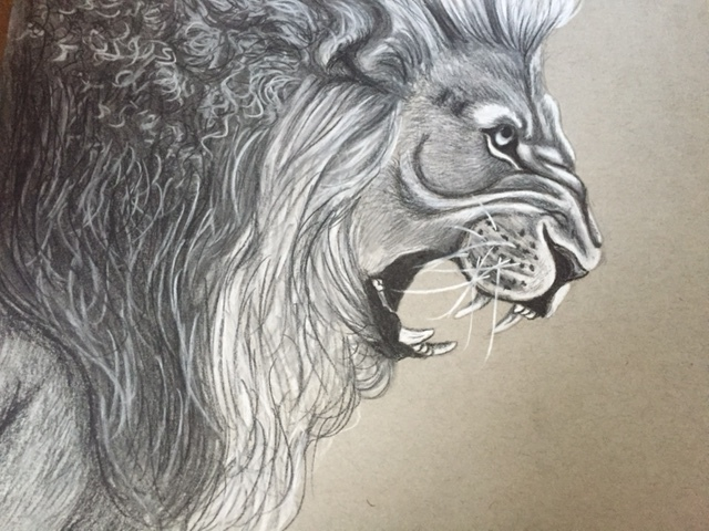 640x480 Lion Charcoal Drawing By Freespirited12