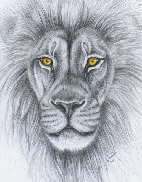 480x617 Lion Drawing By Punxnotdead309