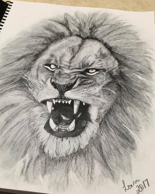 600x749 Lion Drawings
