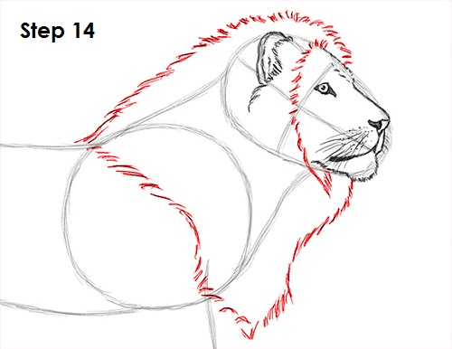 500x386 How To Draw A Lion