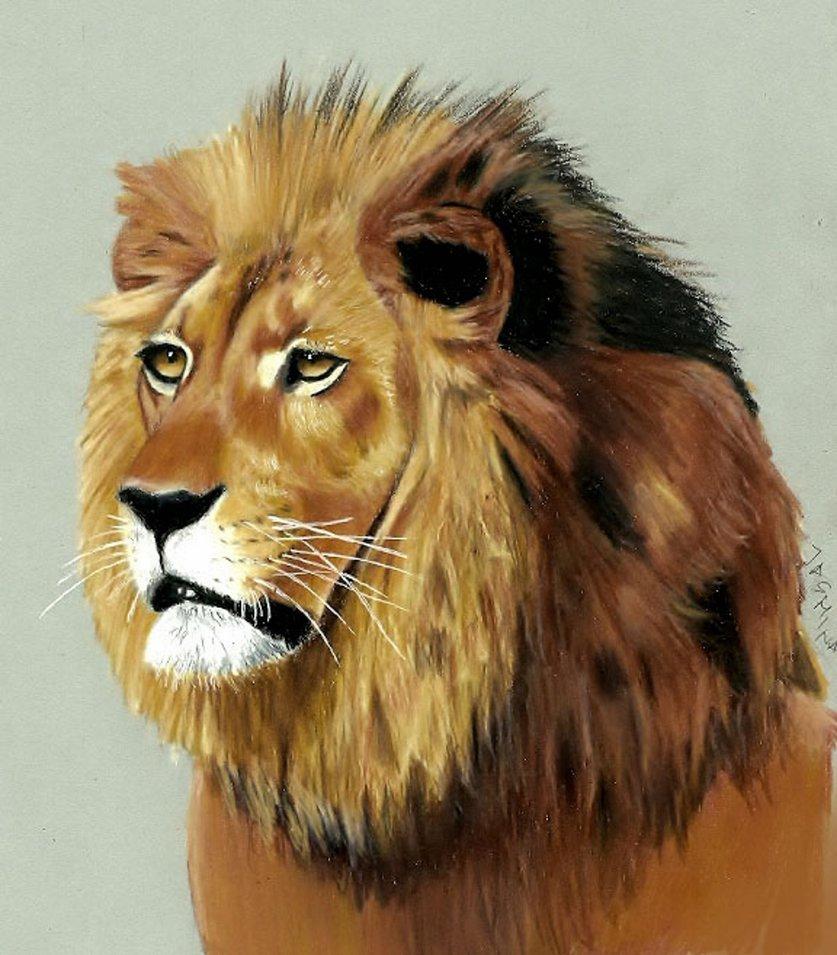 837x955 Lion Colored Pencil Drawing By Jasminasusak