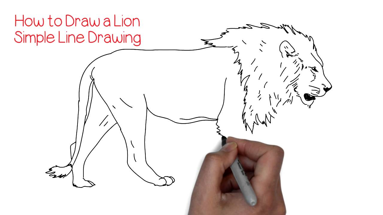1280x720 How To Draw A Simple Lion Yzarts Yzarts