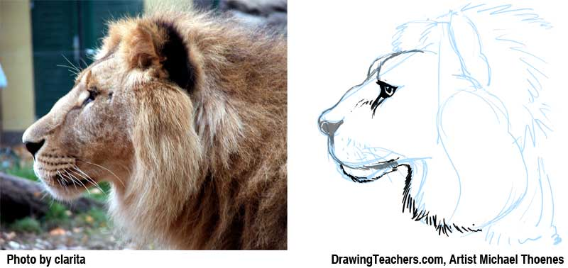 800x378 Lion Drawing