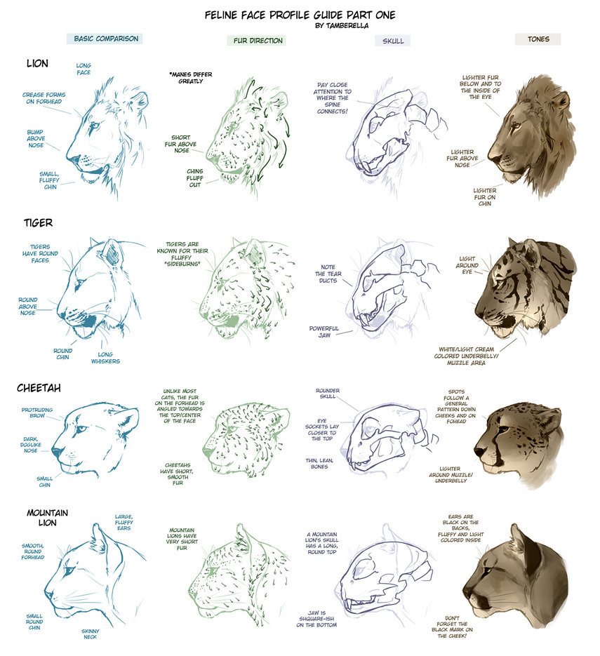 Lion Drawing Tutorial at GetDrawings.com | Free for personal use ...