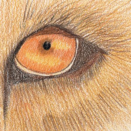 450x448 Lion's Eye