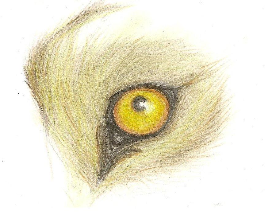 900x700 Lion Eye By Hippiefisken