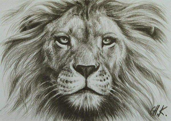 600x425 Images Of Lion Head Drawings