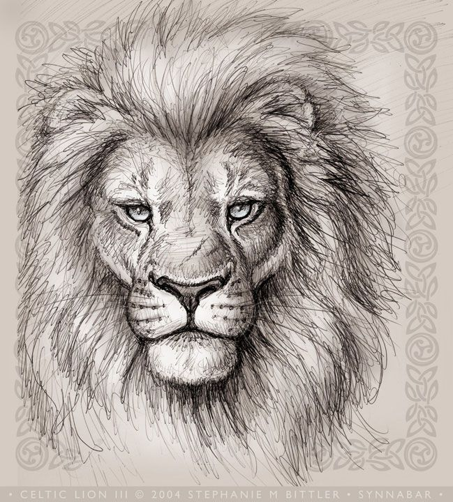 649x720 Lion Head Drawings Celtic Lion Iii Lions Are So Relaxing