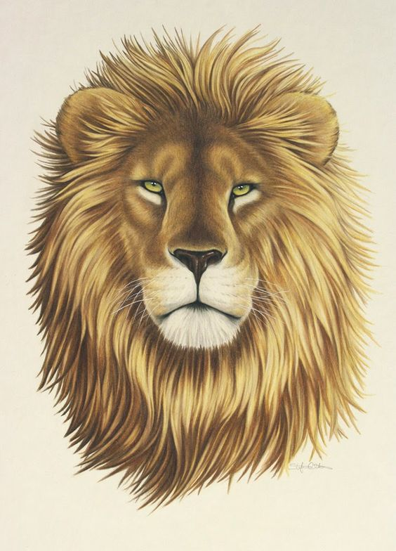 564x784 Pictures Lion Face Drawings,