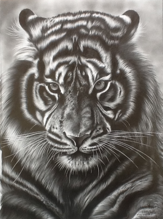 562x757 Tiger Face Pencil Drawing 2016 Drawings Tiger Face