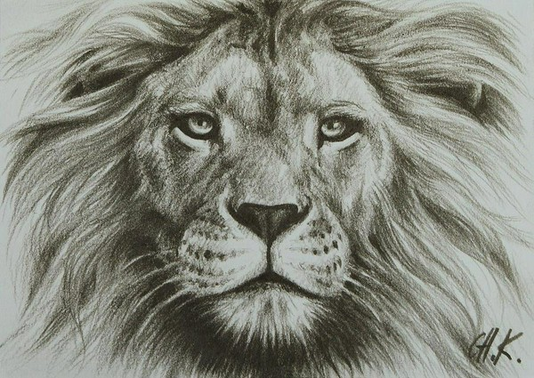 600x425 drawn sketch lion head