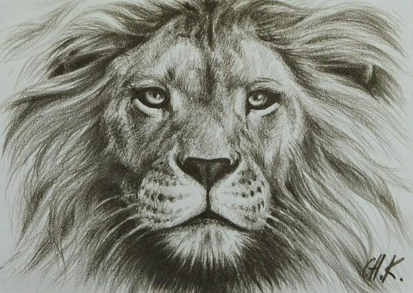600x425 drawn sketch lion head