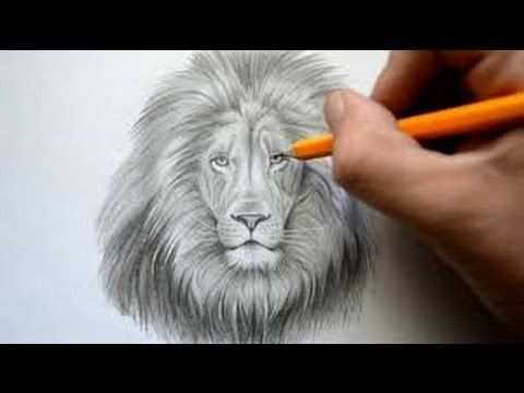 480x360 How To Draw A Lion Face Easy Way Step By Step Drawing For Kids
