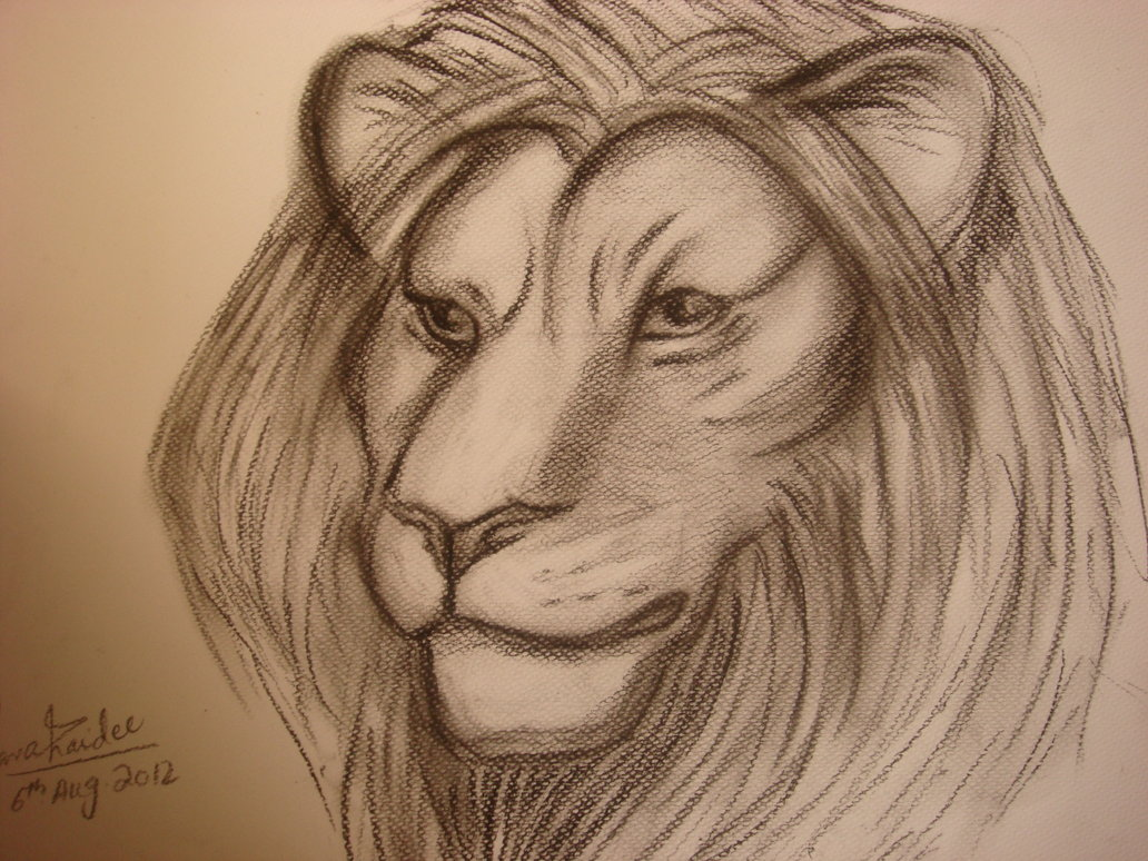 1032x774 How To Sketch A Lion Head, Male Lion, Step By Step, Great Plain