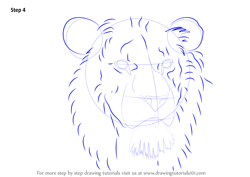844x598 Learn How To Draw Lion Head (Big Cats) Step By Step Drawing
