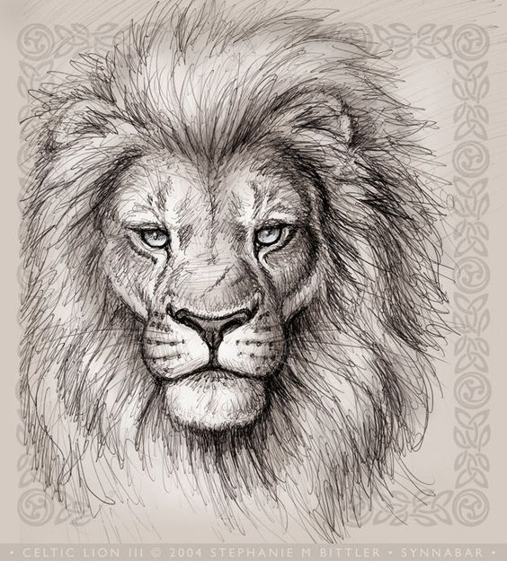 564x625 realistic lion face drawing