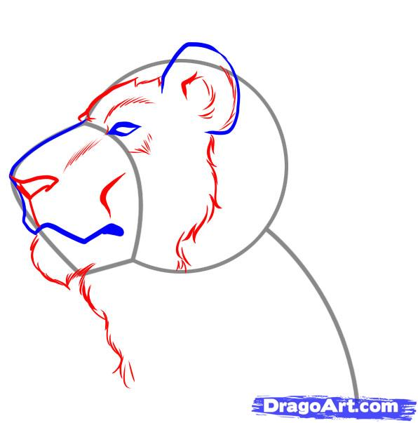 596x603 How To Draw A Lion Face Step 3 Acrylic Painting