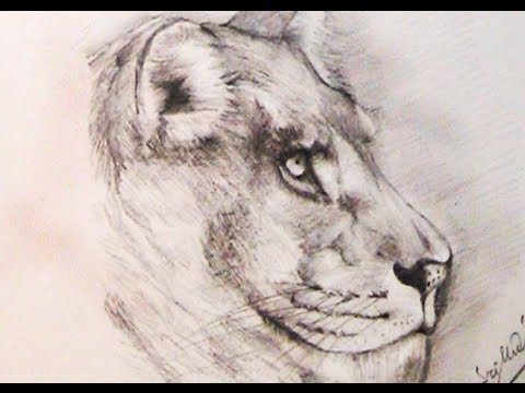 480x360 how to draw a lion using pencil yzarts yzarts