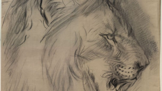 570x320 Pencil Sketch Of Lion Head