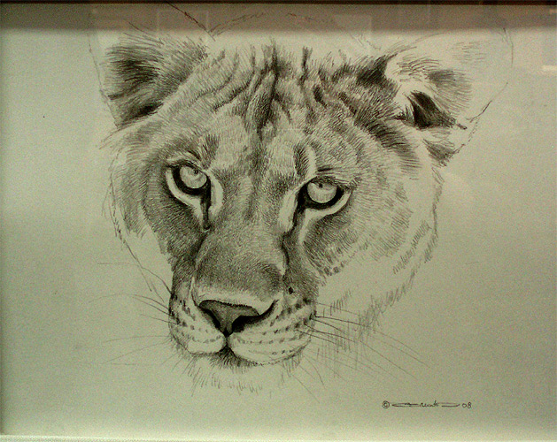 629x500 Lioness Pencil Drawing Lion Face