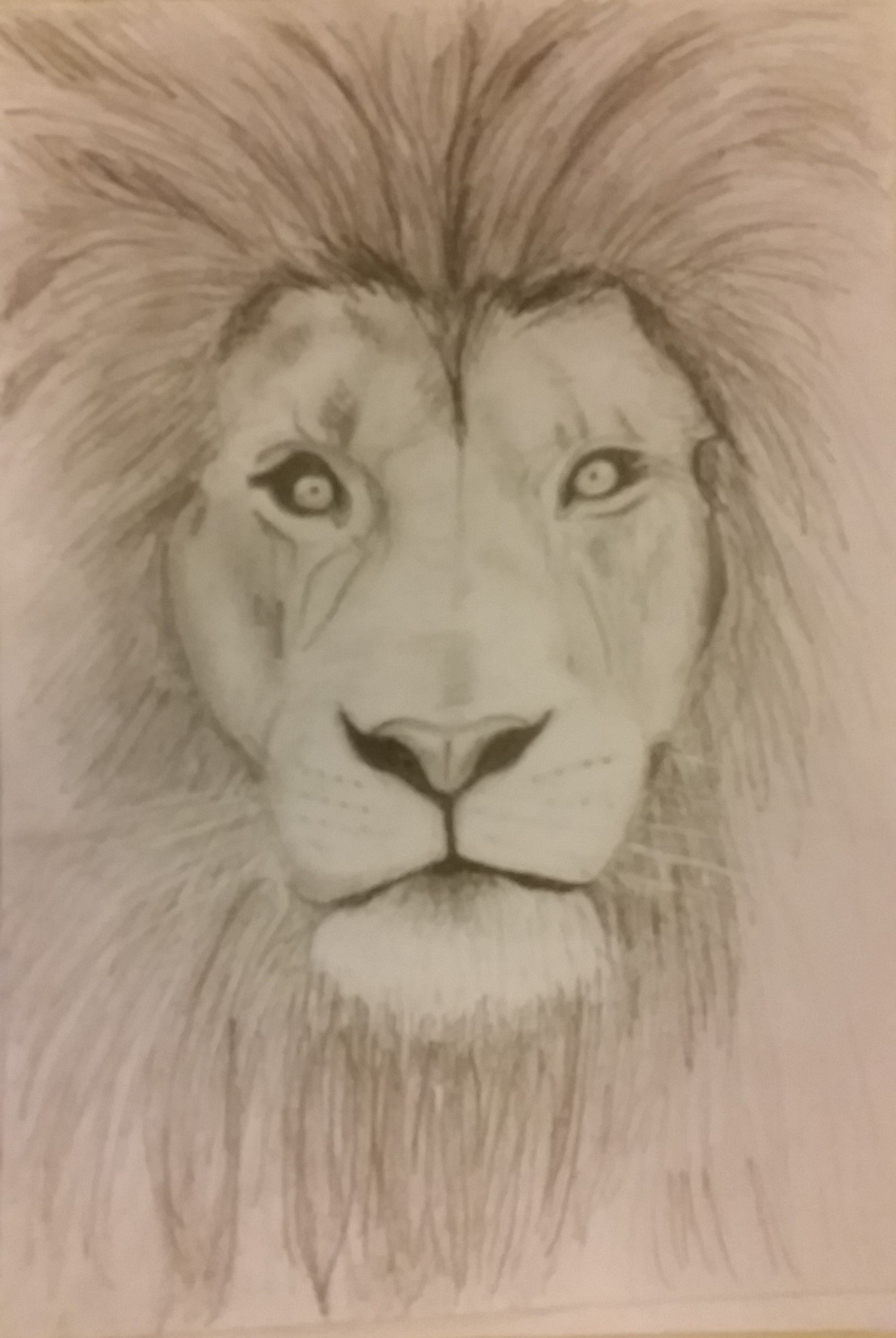1836x2741 Simple Lion Sketchdrawing With Pencil Creations Amp Copies