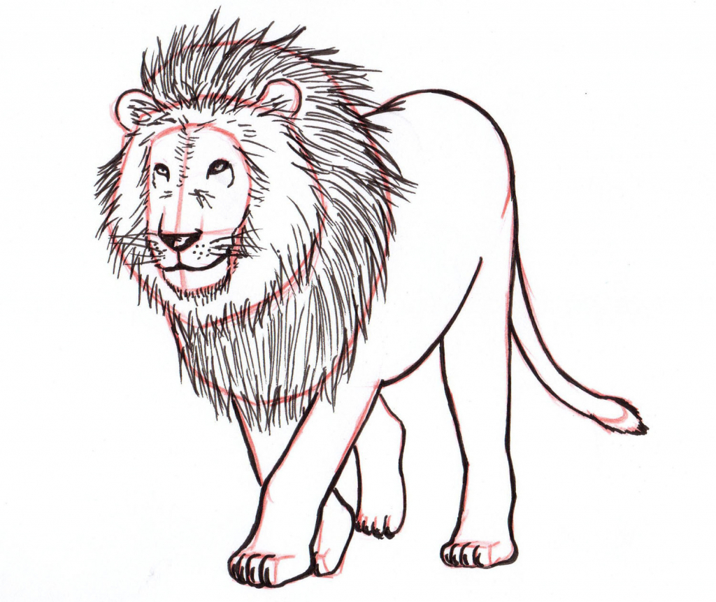 1024x861 Drawing A Lion Step By Step How To Draw Lion For Kids Step Step