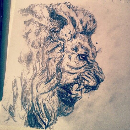 Lion Growling Drawing At Getdrawingscom Free For Personal Use