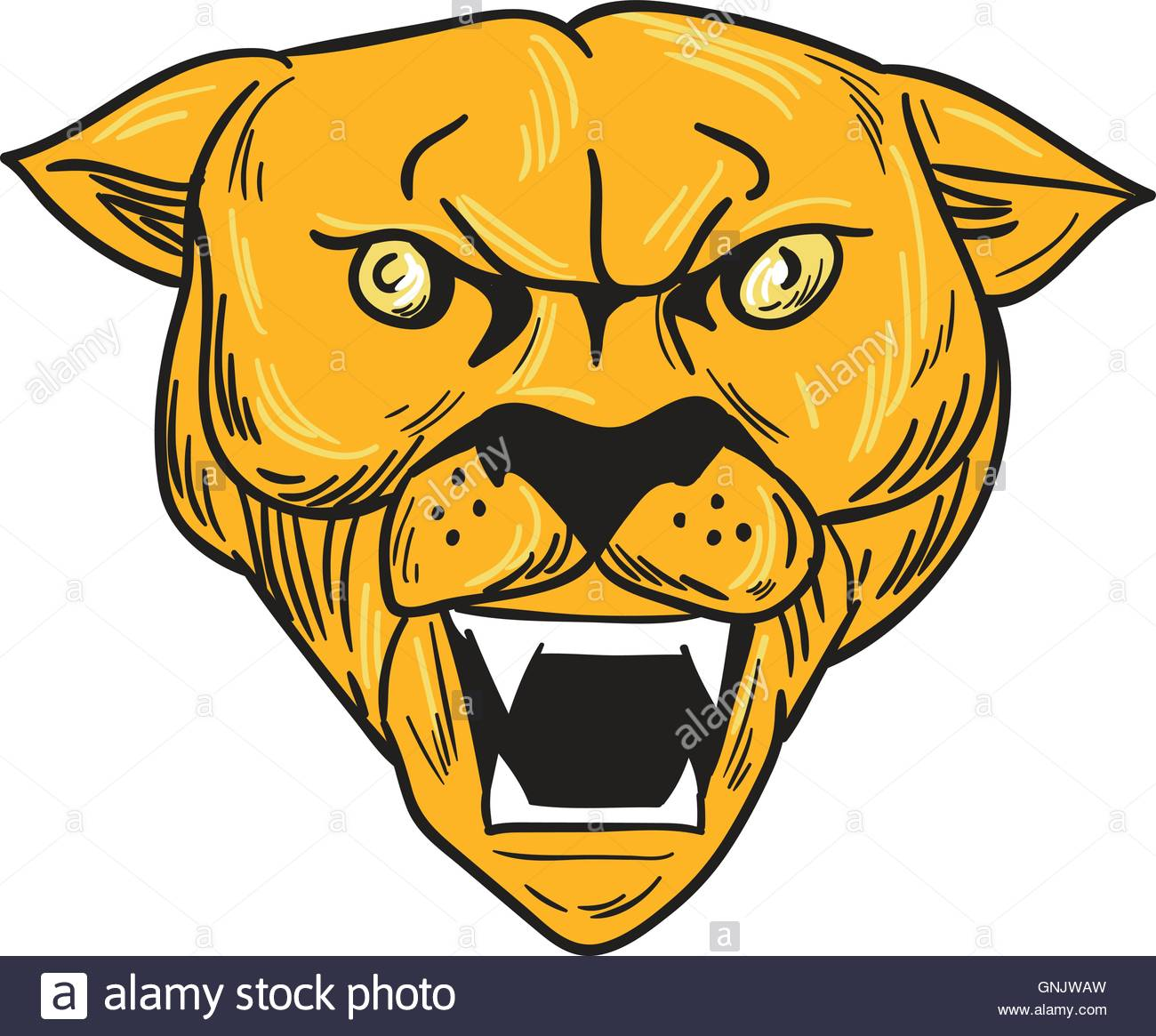 1300x1165 Angry Cougar Mountain Lion Head Drawing Stock Vector Art