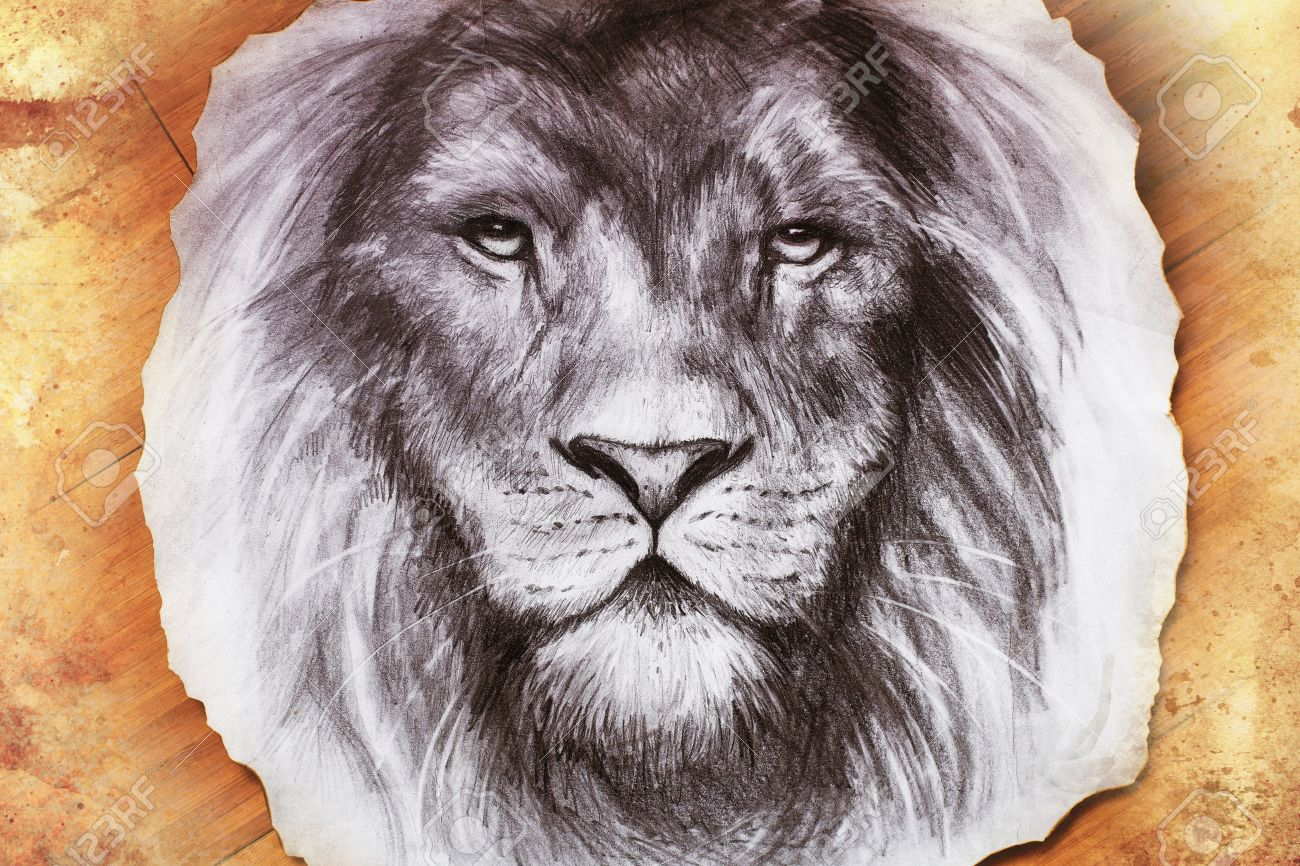 1300x866 Drawing Of A Lion Head With A Majestically Peaceful Expression